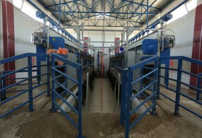 saanen keçi sağım tesisi