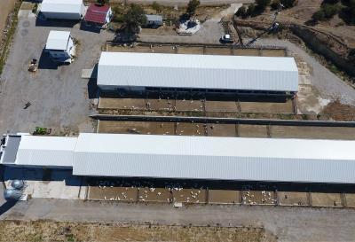 eskar keçi çiftliği