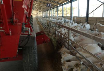 keçilerin yemek vakti