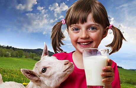 Keçi Sütü Mucizesi